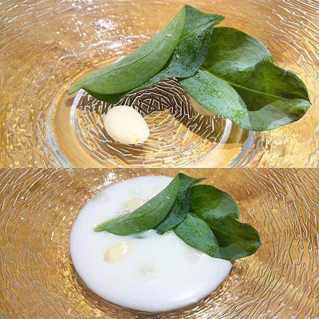 Yodados vegetales
