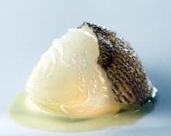 Cebolla Blanca Dulce, Fondo de Bacalao y Pimiento Verde
